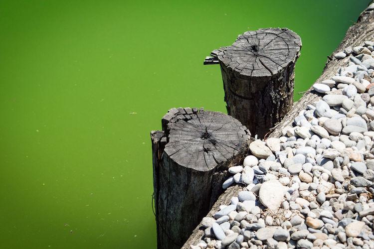 Artificial Lake Backwater Emerald Lake Old Docking Pit Swampy  Trunks Unused Docking