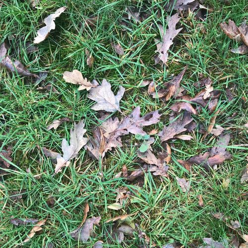 Autumn leaves Leaves Autumn Plant Leaf Day Nature High Angle View Field Plant Part Grass Beauty In Nature Green Color Autumn Dry Close-up Directly Above Outdoors Backgrounds Full Frame Land Growth No People