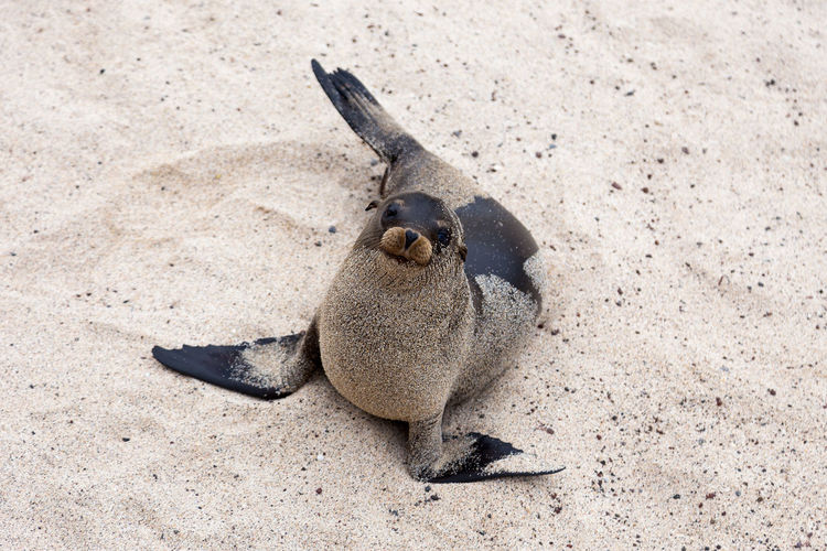 High angle view of an animal on sand