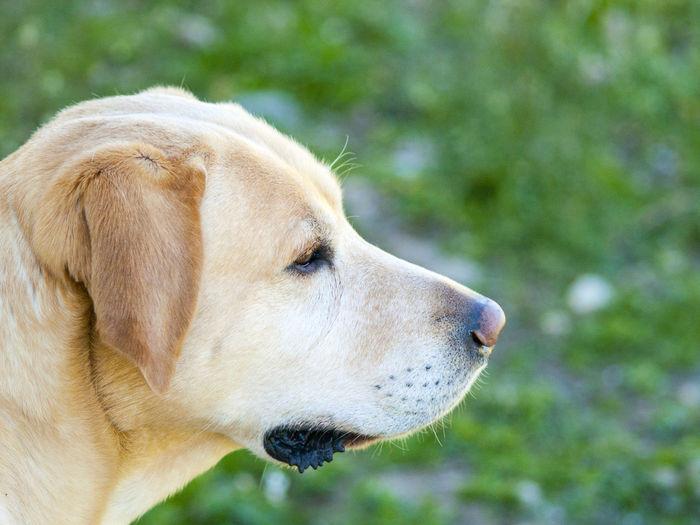 Close-up of dog on land
