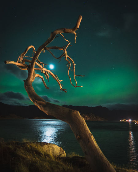 All Halloween posts last few days got me thinking of this spooky, dead tree in the small fishing town of Gjesvaer, Norway. Aurora Borealis Cloudy Sky Dead Tree Fishing Village Night Photography Nordic Light Norway Perspective Beauty In Nature Haunted Illuminated Lake Moonlight Mountain Nature Night Night View No People Outdoors Scenics Sky Spooky Tranquil Scene Tranquility Water EyeEmNewHere