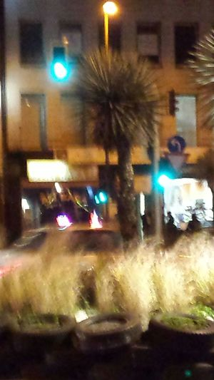 Palm Palm Tree Night Traffic Nightshot Night Artphoto Night Colorz~ Colorsplash Color Splash Traffic Lights Trafficlight Fuzzy Fuzzy City Colors Of The Night Amazing View Street Photo Street Life Street View City View  No People Showing Imperfection City At Night