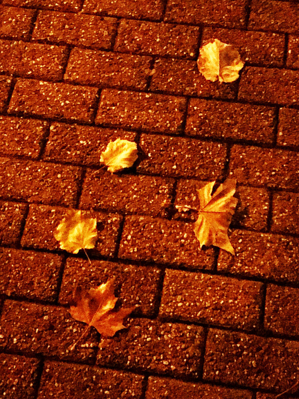leaf, plant part, nature, autumn, no people, plant, close-up, outdoors, change, footpath, street, beauty in nature, yellow, vulnerability, orange color, sunlight, flower, fragility, brick, day, paving stone, leaves, natural condition