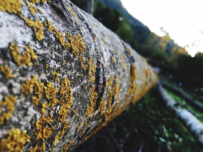 Tree Moss Selective Focus Nature Nuture Tree Trunk Surface Level Textured  Focus On Foreground Close-up Rough Bark Tranquility Mountain Outdoors Non-urban Scene Tranquil Scene Rocky Differential Focus No People Scenics