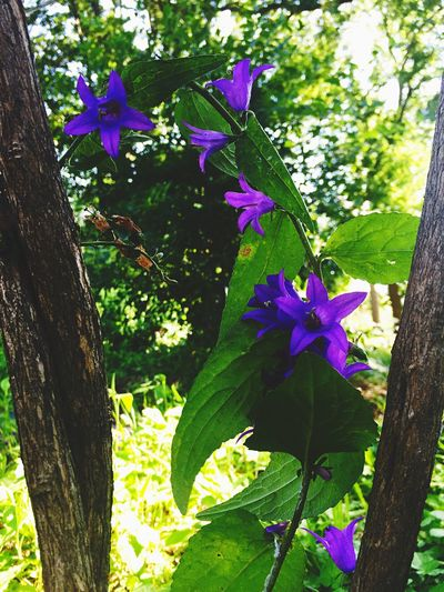 Beauty In Nature Blooming Blossom Botany Close-up Day Flower Flower Head Focus On Foreground Fragility Freshness Green Color Growth In Bloom Leaf Nature No People Outdoors Petal Pink Color Plant Purple Stem Tranquility Tree Trunk
