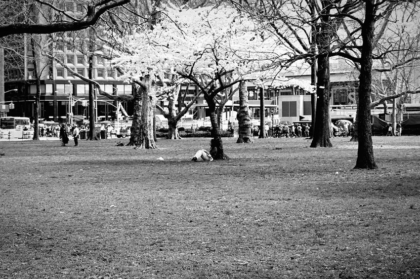 Relaxing Cherry Blossoms Photo Taking Photos Taking Photos Trip Battery Park Reading Park Life