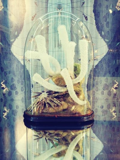 Dreams and nightmares cannot be differentiated in a glass jar. London Londonmuseums Uclzoology Realityvsdreams