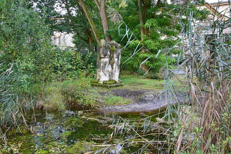Bogensee Pond Tranquility Beauty In Nature Day Grass Growth Nature No People Outdoors Plant Sculpture Tranquility Tree Tree Trunk Water