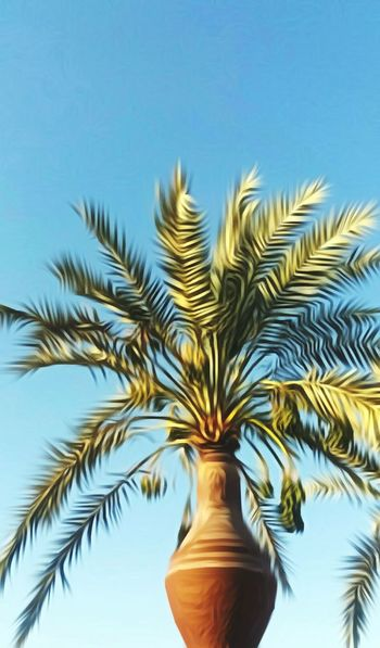 That's how a plamtree gets out of an amphor of water Fırst Eyeem Photo Egypt Egyptphotography Countryside Palm Palmtree Sky Palm Leaves Dates Green Brown Amphora Water Agriculture Upperegypt