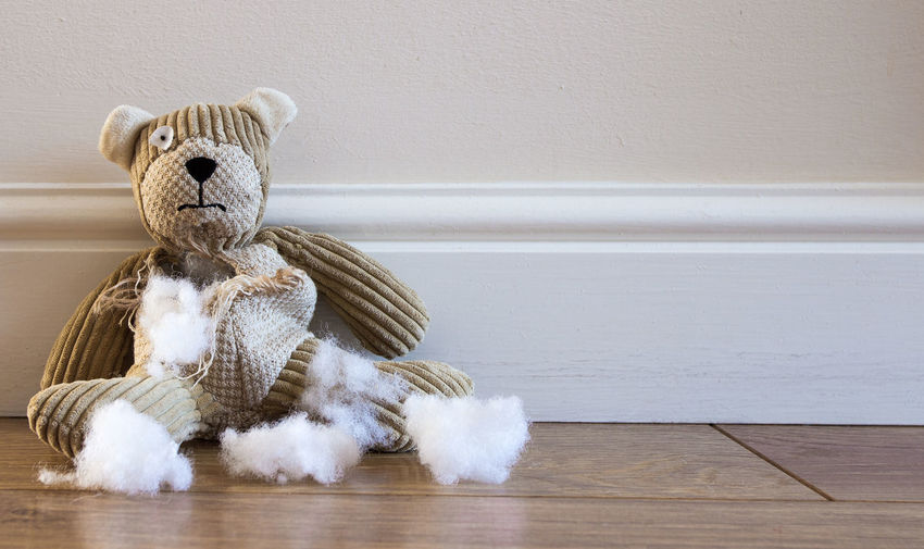 A sad and abandoned teddy bear with torn, damaged and ripped and stuffing coming out with copy space