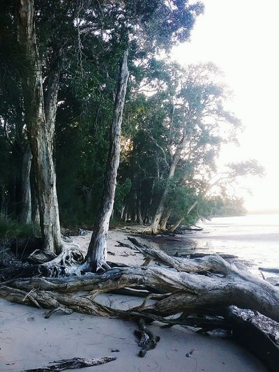 Tilligerry Habitat Portstephens Nature Outdoors Sea No People Tree Beauty In Nature Vacation Beach Water Day first eyeem photo