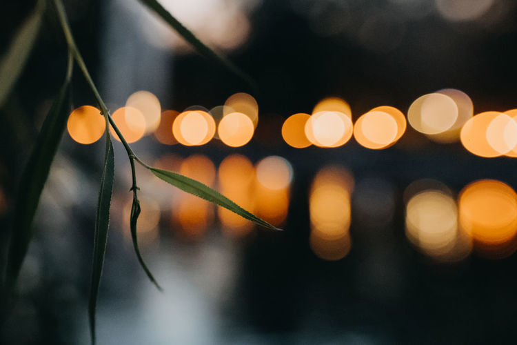 Illuminated Night Focus On Foreground No People Close-up Defocused Light - Natural Phenomenon Lens Flare Lighting Equipment Circle Shape Glowing Selective Focus Geometric Shape Nature Outdoors Dusk Plant Beauty In Nature Decoration Electricity  Light EyeEmNewHere