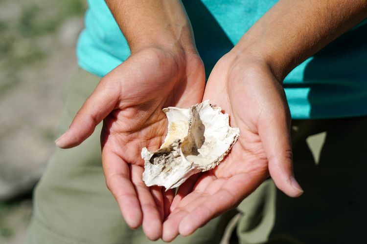 Midsection of person holding seashell