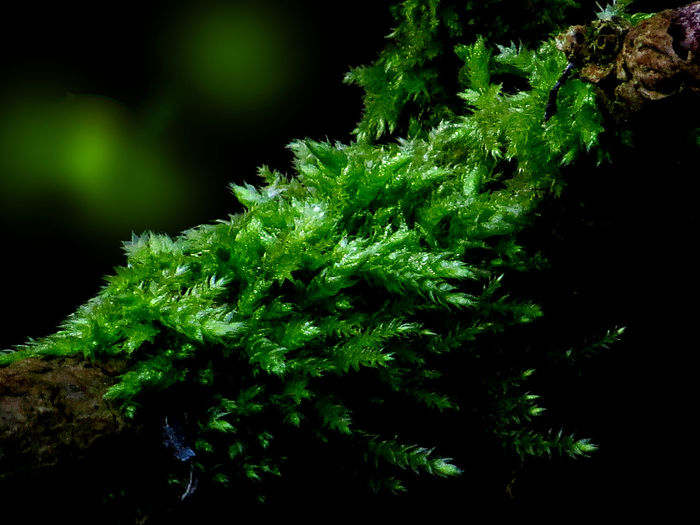 Beauty In Nature Botany Close-up Detail Green And Black Green Color In The Woods Light And Shadow Light In The Darkness Moss Outdoors Selective Focus