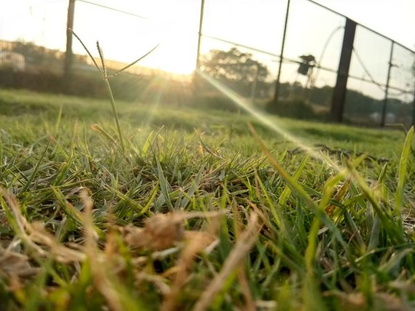 green grasses EyeEm Selects Plant Themes EyeEm Nature Lover Growth Field Grass Nature No People Rural Scene Plant Beauty In Nature Day Outdoors Close-up Greenhouse Sky Freshness Green Color Soccer Field EyeEmNewHere