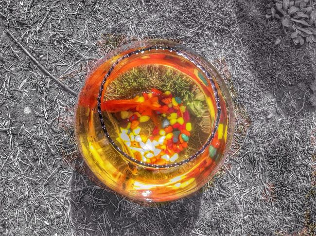 A fish called.... HDR Fish Fish Bowl Taking Photos Check This Out IPhoneography