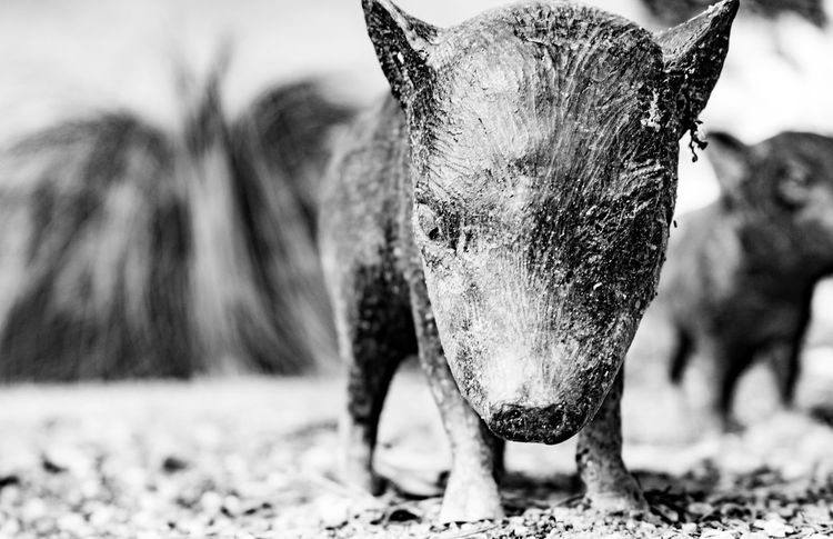 Baby javelina statues. Outdoors Tucson Arizona  Thephotographer Photography Eyemphotography Surreptitious Night Monochrome Going Black & White Sculpture Arizona Javelina