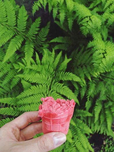 Cropped hand of person holding ice cream against plants