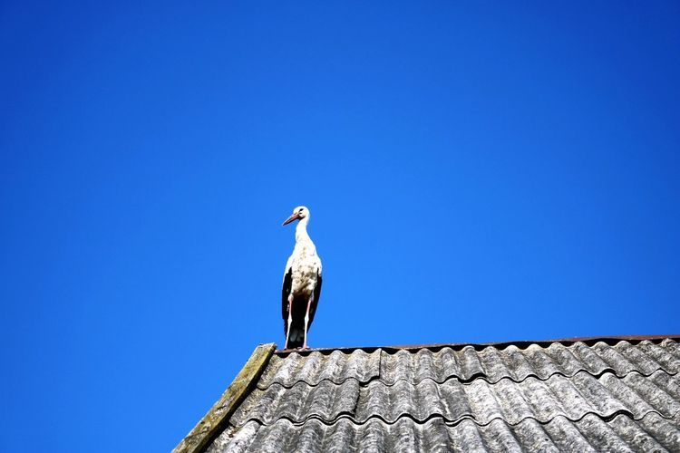 Low angle view of seagull perching on wall