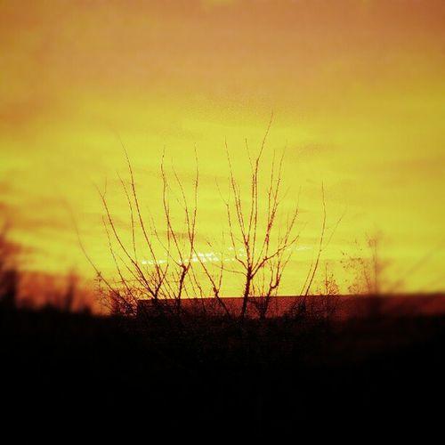 #sunset #sky #yellow Yellow Sunset Sky