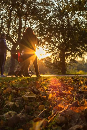 Sun shining through tree on field during autumn