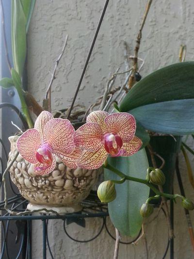 Patio bloom