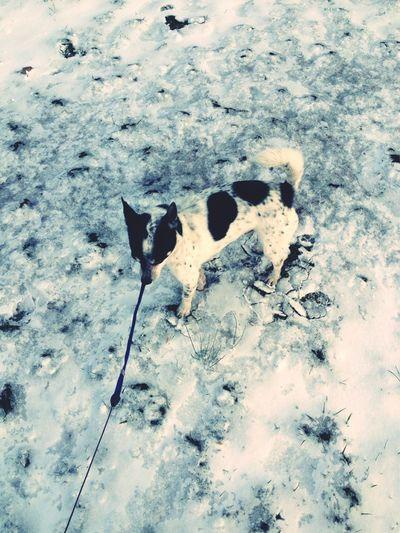 Snow & Oreo