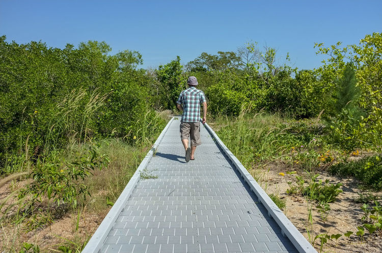 Man walking away on the Mangrove Boardwalk in East Point, in Darwin, Northern Territory, Australia. Australia East Point Darwin Australia East Point Mangrove Boardwalk East Point Reserve Northern Territory Australia Boardwalk Casual Clothing Day Full Length Green Color Growth Leisure Activity Lifestyles Nature One Person Outdoors Plant Real People Rear View Sky Standing Sunlight Tree Walking Summer Exploratorium #FREIHEITBERLIN The Traveler - 2018 EyeEm Awards Be Brave