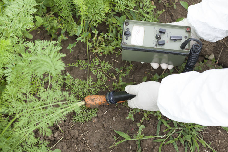 Cropped hands of man examining carrot growing on field