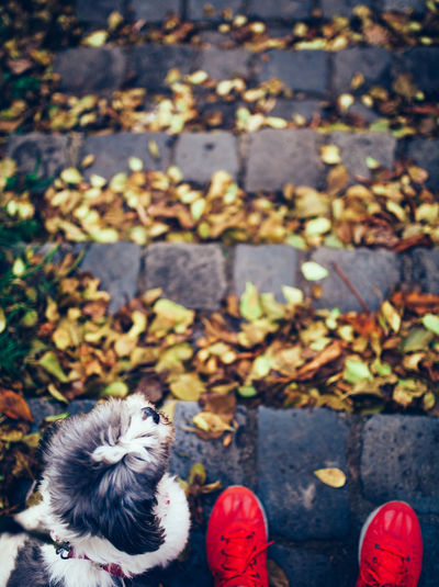 Walk in the park Animal Themes Autumn Day Dog Dogwalk Domestic Animals Fall Leaf Leash Mammal Nature One Animal Outdoors Park Park - Man Made Space Pets Red Shihtzu Shoes Stairs Stone Material TeamCanon Walk