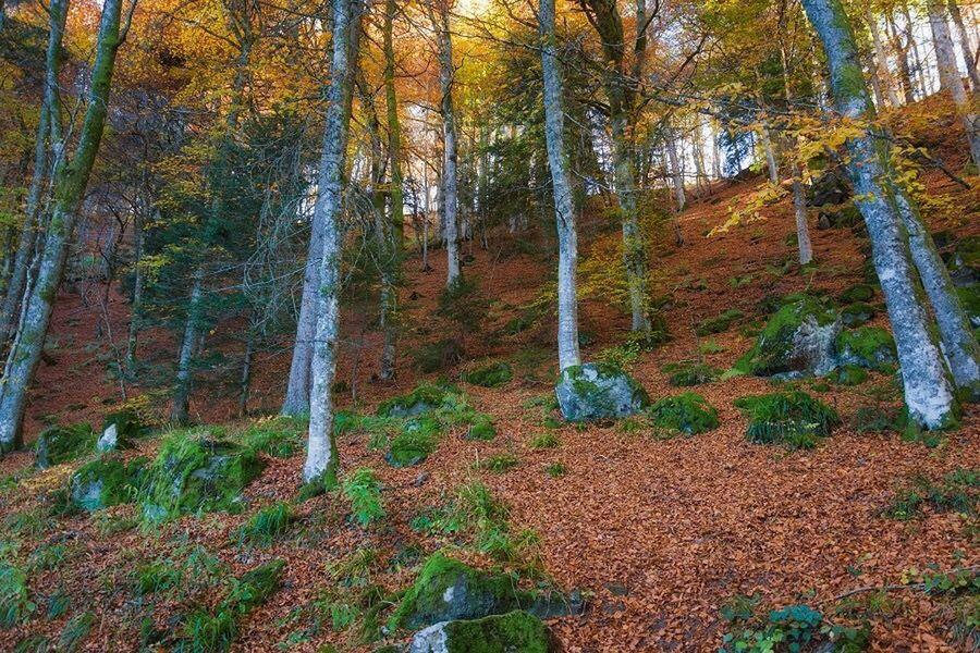 Autumn Colors Auvergne Enjoying The View Autumn