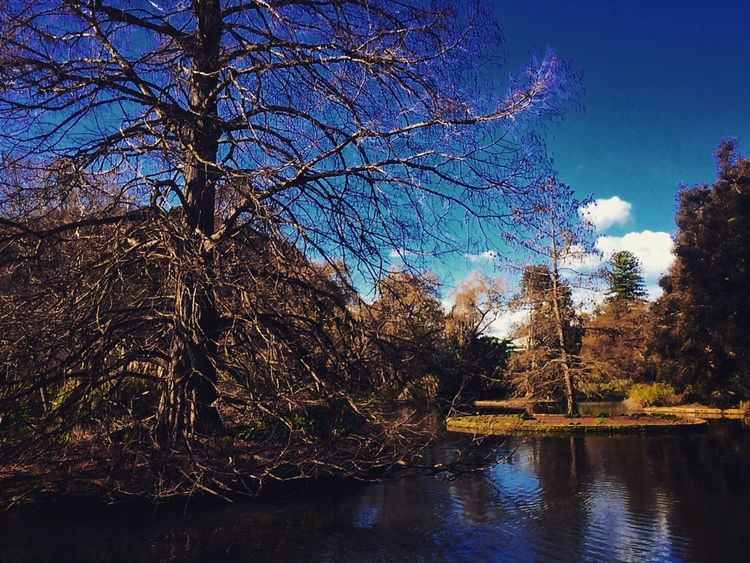 Pond Lake Water Garden Nature Adelaide Australia First Eyeem Photo