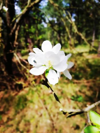 Flower Head Flower Tree Springtime Petal Branch Blossom White Color Insect Close-up