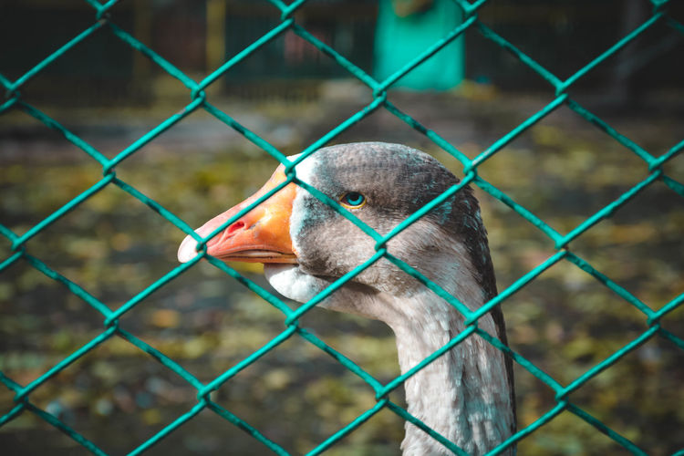 Close-up of bird seen through chainlink fence
