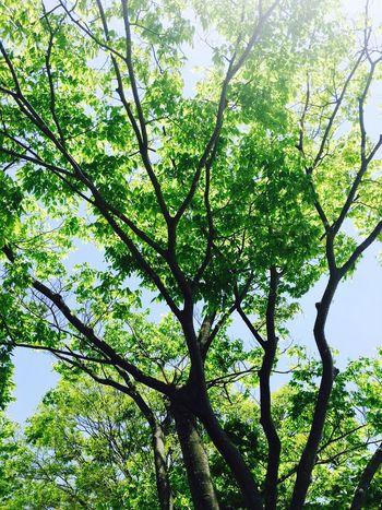 木漏れ日 Komorebi