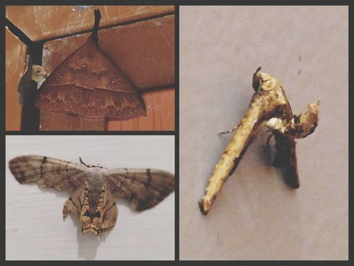Random post of insects i found this morning. Mother nature 👏🏻 Bugs Insects  ASIA Borneo