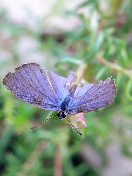 butterfly feeding insect closedup Perching Spread Wings Flower Butterfly - Insect Insect Full Length Butterfly Close-up Animal Themes Plant Animal Antenna