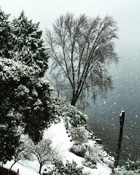 Beauty In Nature Branch Day Italy Lake Como Lake Como Italy Leisure Activity Nature One Person Outdoors People Real People Silhouette Sky Snow Snow On The Lake Snow ❄ Tranquility Tree