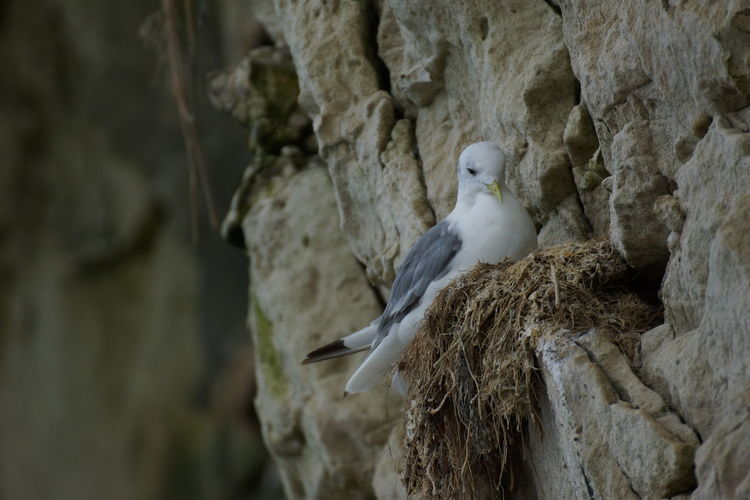 Low angle view of bird on nest