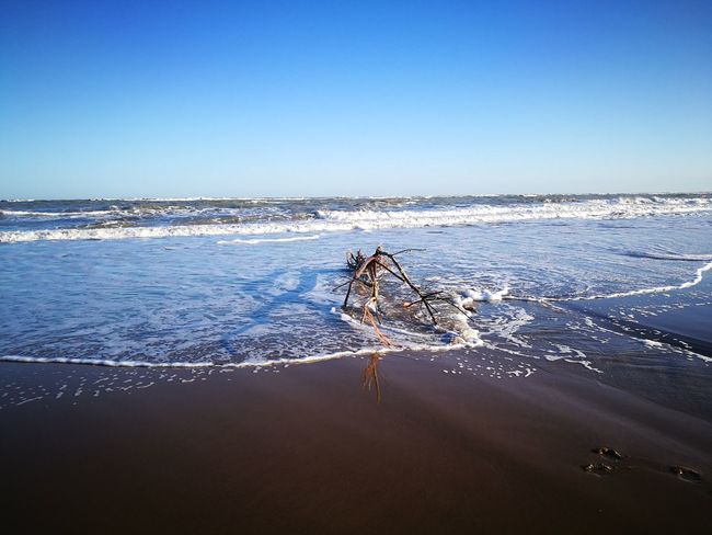 Branch Tree Trunk Tree Abandoned Object Wooden Beach Outdoors Scenics No People Beauty In Nature Sky Clear Sky Horizon Over Water Blue Nature Water Sea Sunlight High Angle View Seascape Wave Finding New Frontiers