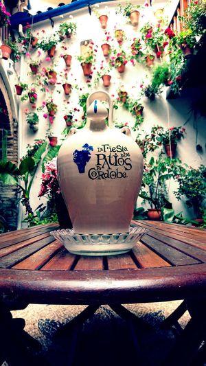 Party - Social Event Fiestas Patios De Córdoba Botijo Flowes Of Spring Colors Plant Teapot Close-up
