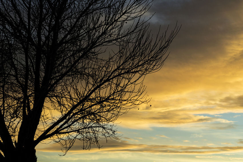 Colors Moody Sky Nature Nature On Your Doorstep Silhouette Astronomy Bare Tree Beauty In Nature Branch Cloud - Sky Clouds And Sky Colorful Day Low Angle View Nature No People Outdoors Scenics Silhouette Sky Sunset Tranquil Scene Tranquility Tree Tree Silhouette