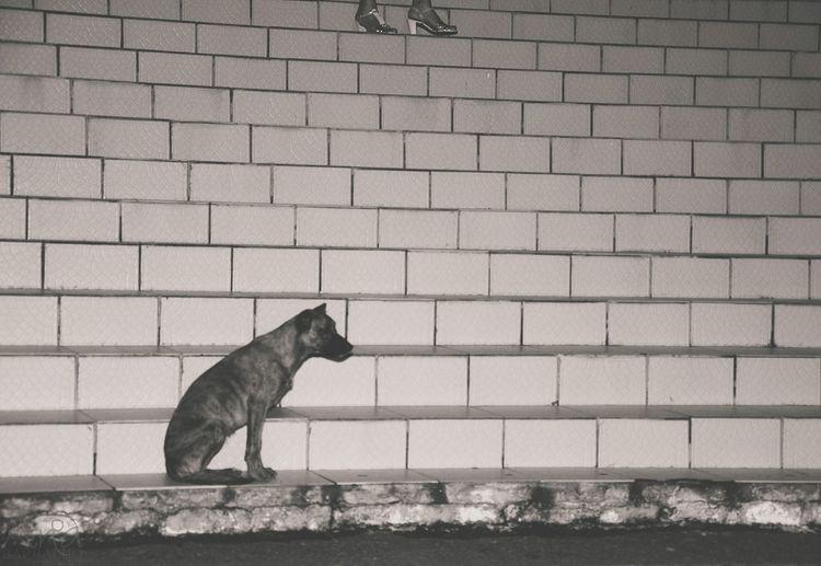 Dog Sitting On Steps