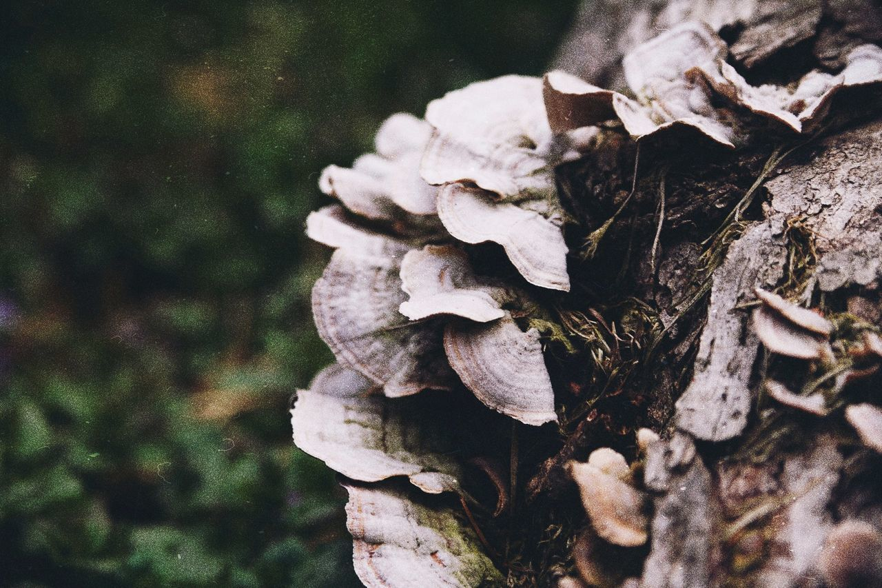 plant, close-up, mushroom, nature, tree, day, fungus, no people, focus on foreground, growth, selective focus, wood - material, land, vegetable, forest, beauty in nature, field, dry, vulnerability, toadstool, outdoors, bark