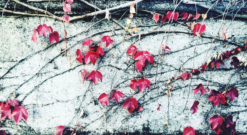 Nature fall Red