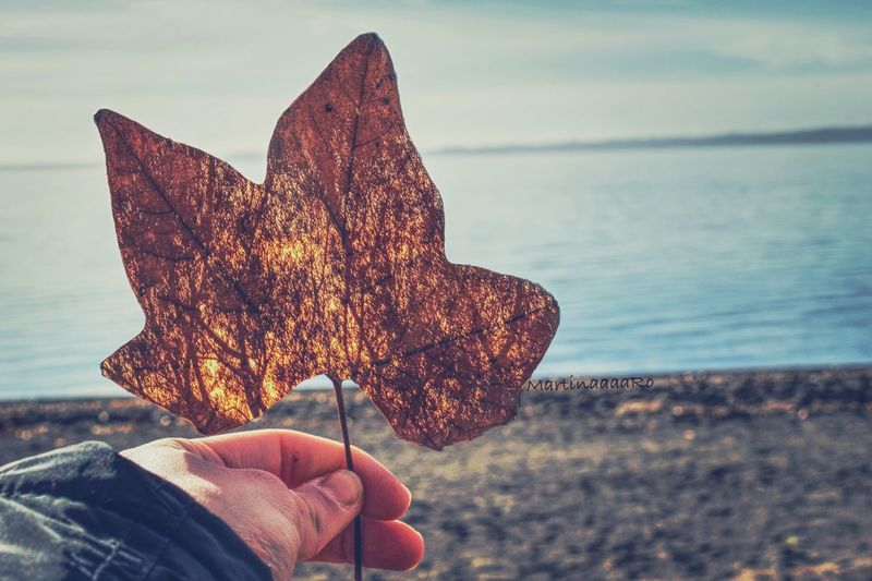 Look beyond appearance🍁 Autumn Colors Landscape Lake View Bolsena Bolsenalake Lake Olive Tree Autumn Colors Human Hand One Person Autumn Human Body Part Leaf Nature Real People Human Finger Outdoors Holding Focus On Foreground Unrecognizable Person Close-up Day Change Beauty In Nature Water Sea Sky Maple