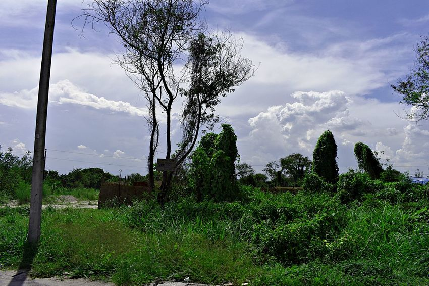 passing through Beauty In Nature Cloud - Sky Day Environment Field Grass Green Color Growth Land Landscape Nature No People Non-urban Scene Outdoors Plant Scenics - Nature Sky Tranquil Scene Tranquility Tree