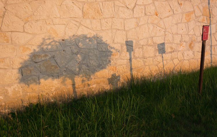 Focus On Shadow Grass Growth Outdoors Plant Shadow Sunset Symbol Wall Whichshadow? Adapted To The City Adapted To The City The City Light EyeEm Diversity Break The Mold