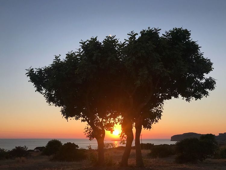 Falassarna Sky Sunset Tree Plant Beauty In Nature Water Nature Tranquility Growth Idyllic Orange Color Outdoors Sun Silhouette Sea No People Land Tranquil Scene Scenics - Nature Non-urban Scene