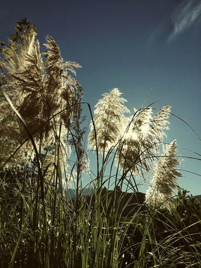 Growth Tranquility Sion Switzerland POV Outdoors Sunlight Plant Scenics Clear Sky Landscape Valere